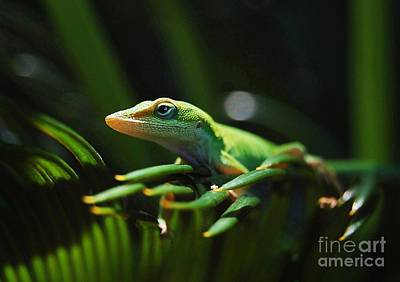 Little Lizard On A Sago Palm Print by Kathy Baccari