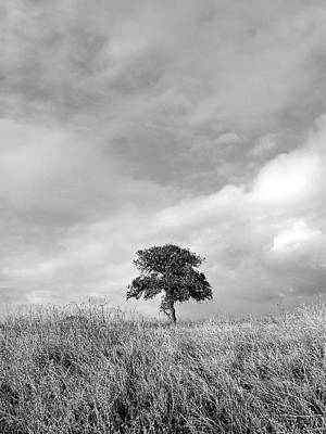 Little Lone Oak Tree Art Print