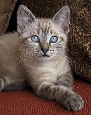 Photograph - Little Miss Blue Eyes by David and Carol Kelly