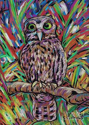 Pastel - Little Morepork Owl by Dianne  Connolly