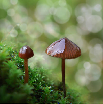 Photograph - Little Mushroom Reflections by Barbara St Jean