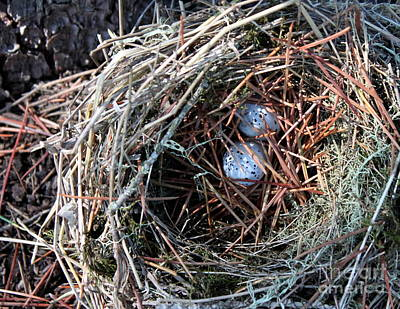 Photograph - Little Nest by Erica Hanel