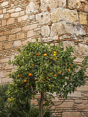 Little Orangetree Art Print by Lutz Baar