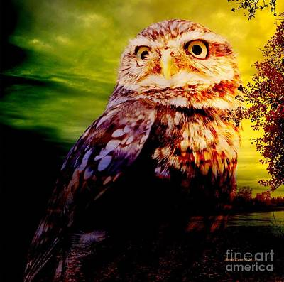 Photograph - Little Owl In Wilderness by Annie Zeno