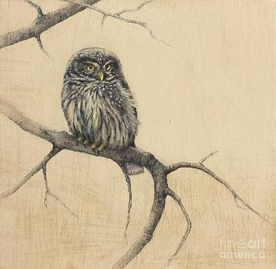 Bird Art Mixed Media - Little Owl by Lori  McNee