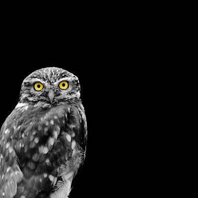 Little Owl Photograph - Little Owl by Mark Rogan