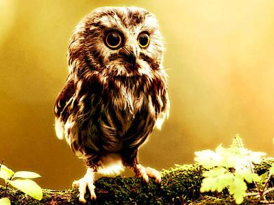 Bird Photograph - Little Owl by VRL Art