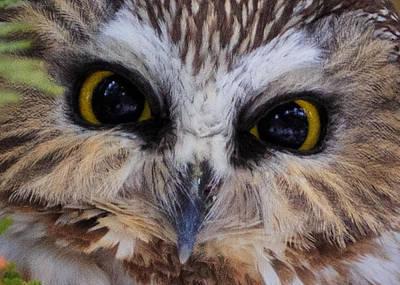 Whet Owl Photograph - Little Owls by Everet Regal