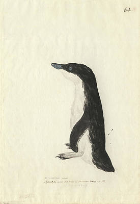1794 Photograph - Little Penguin by Natural History Museum, London
