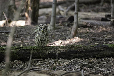 Barred Owl Photograph - Little People Of The Forest by Everet Regal