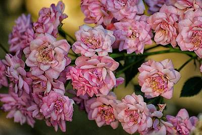 Photograph - Little Pink Roses For You by Beth Akerman