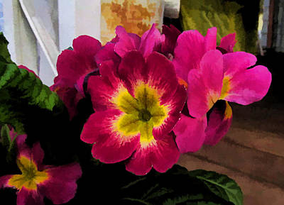 Photograph - Little Primrose Flowers by Ron Roberts