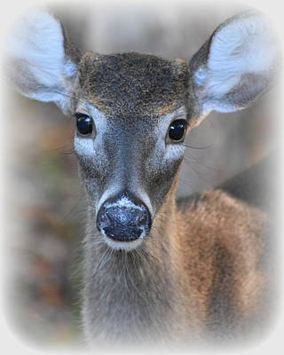 Photograph - Little Prince Buck by Sheri McLeroy