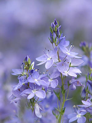 Photograph - Little Purple Flowers Vertical by Gill Billington