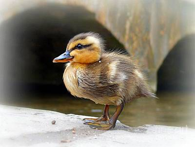 Photograph - Little Quack by Morag Bates