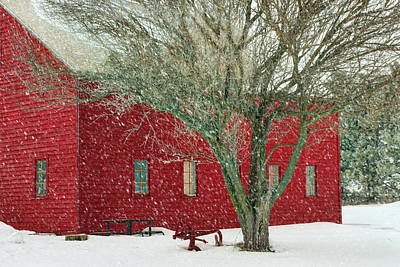 Papillion Photograph - Little Red In Winter by Nikolyn McDonald