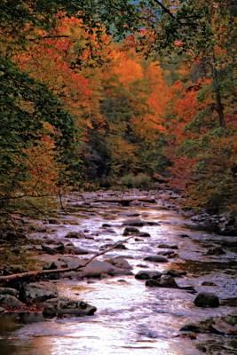 Little River In Autumn Art Print