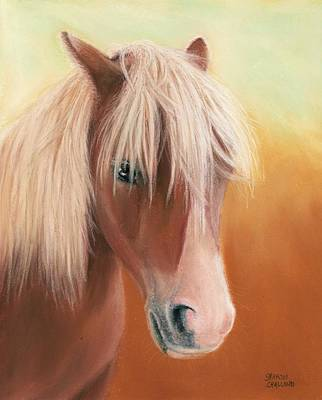 Horse Art Pastels Painting - Little Shetland Pony by Sharon Challand