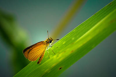 Skipper Photograph - Little Skipper by Shane Holsclaw