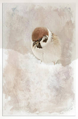 Animales Photograph - Little Sparrow by Heike Hultsch