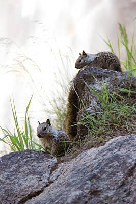 Photograph - Little Squirrels by Masha Batkova