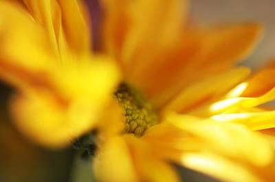 Floral Composition Photograph - Little Sun by Jenny Rainbow