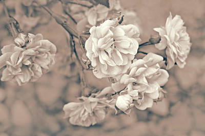 Photograph - Little Tea Roses Beige by Jennie Marie Schell