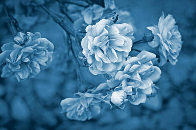 Photograph - Little Tea Roses Blue by Jennie Marie Schell