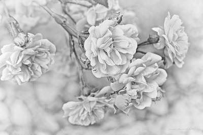 Photograph - Little Tea Roses Gray by Jennie Marie Schell