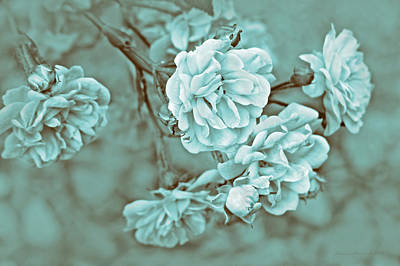 Photograph - Little Tea Roses Teal Green by Jennie Marie Schell