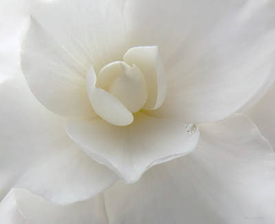 Photograph - Little Raindrop White Begonia Flower  by Jennie Marie Schell