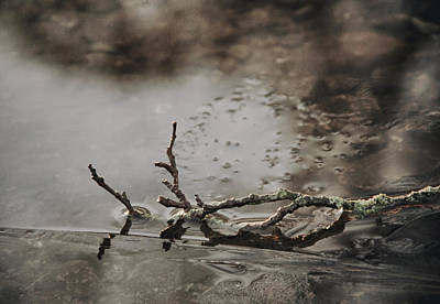 Gnarly Photograph - Little Thing by Odd Jeppesen