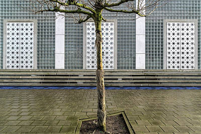 Netherlands Wall Art - Photograph - Little Tree Scape by Susanne Stoop