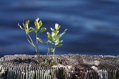 Photograph - Little Tree by Willard Killough III