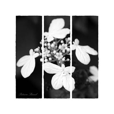 Photograph - Little White Blossoms by Patricia Strand
