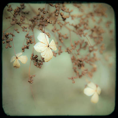 Art Print featuring the photograph Little White Flowers - Floral - The Little Things In Life by Gary Heller