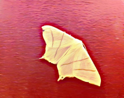 Digital Art - Little White Moth by YoursByShores Isabella Shores