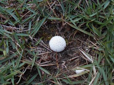 Photograph - Little White Mushroom by Jenna Mengersen