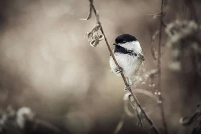 Wild Birds Photograph - Little World by Christian Duguay