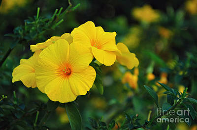 Trumpet Flower Photograph - Little Yellow Trumpets by Kaye Menner