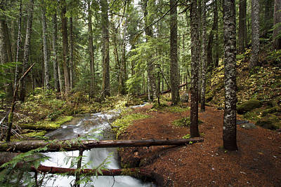 Photograph - Little Zig Zag Stream D3282 by Wes and Dotty Weber