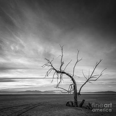 Photograph - Life After Death 1 by Alexander Kunz