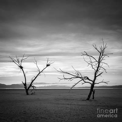 Photograph - Life After Death 2 by Alexander Kunz