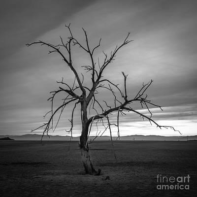 Photograph - Life After Death 3 by Alexander Kunz