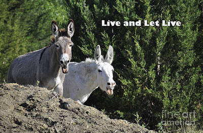 Photograph - Live And Let Live by Cheryl McClure