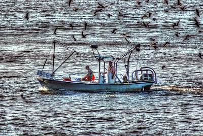 Digital Art - Live Bait Fishing With The Birds by Michael Thomas