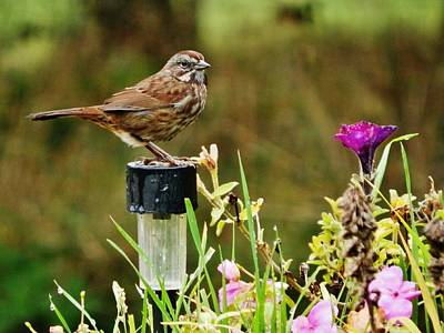 Photograph - Live Garden Decor by VLee Watson