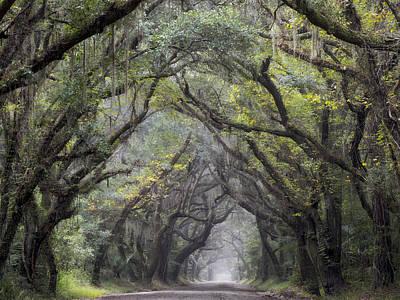 Photograph - Live Oak Archway Horizontal  3 by Jo Ann Tomaselli