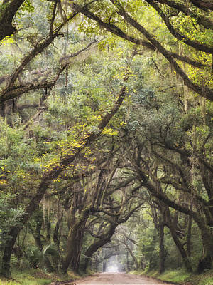 Photograph - Live Oak  Archway Verticle 1 by Jo Ann Tomaselli