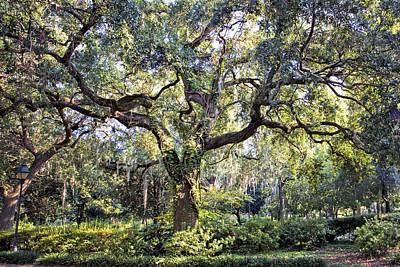 Live Oak Art Print by Diana Powell